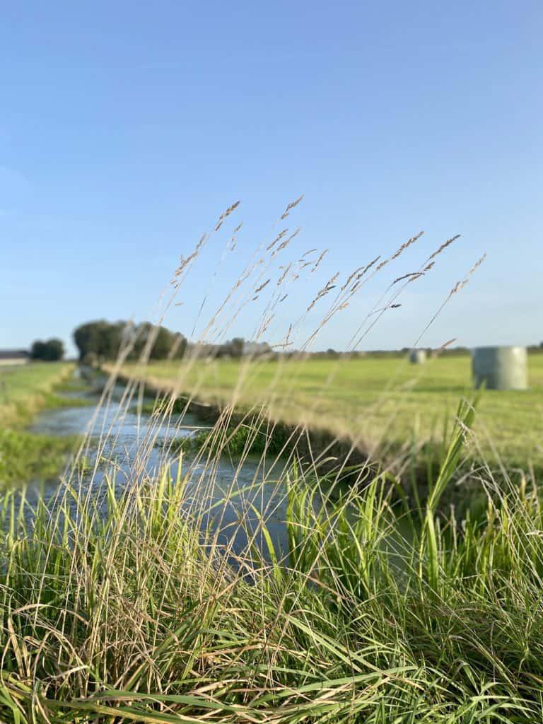 Toekomst Hegewarren: foto van grasland